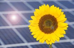 Sonnenkollektoren für erneuerbare Energie mit Sonnenblume lizenzfreies stockbild