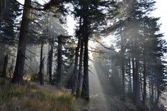 Sonnenlicht Stockfotografie