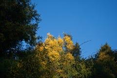 Sonnenlicht auf Bäumen Lizenzfreie Stockfotos