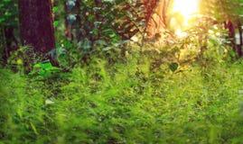 Sonnenlicht auf dem Gras lizenzfreies stockfoto