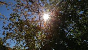 Sonnenlicht auf den Blättern von Bäumen stock footage
