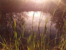 Sonnenlicht auf einem Fluss Lizenzfreies Stockfoto