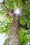 Sonnenlicht auf einen Baum Stockfotografie