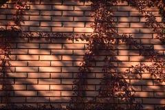 Sonnenlicht auf einer Backsteinmauer Stockfotos