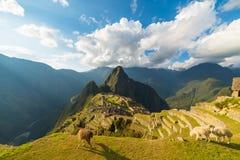Sonnenlicht auf Machu Picchu, Peru, mit Lamas im Vordergrund Stockfotografie