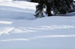 Sonnenlicht auf Schnee durch großen Baum stockbild