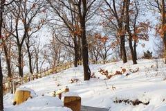 Sonnenlicht auf Schneefeld Lizenzfreies Stockbild