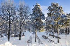 Sonnenlicht auf snowfilled Kiefern draußen in einem snowscape mit Fahrradstand stockfotografie