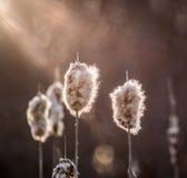 Sonnenlicht auf Weiden Stockbild