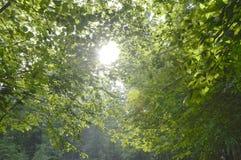 Sonnenlicht, das in den Wald strahlt Lizenzfreie Stockbilder