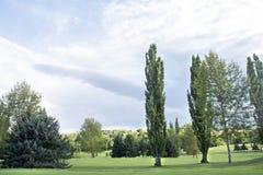 Sonnenlicht, das durch Bäume mit Sturmwolken strömt Lizenzfreies Stockbild