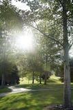 Sonnenlicht, das durch Bäume mit Sturmwolken strömt Stockfoto
