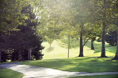 Sonnenlicht, das durch Bäume strömt Stockbilder