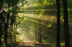 Sonnenlicht, das durch bricht Stockfotos