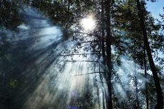 Sonnenlicht, das durch die Bäume fällt Lizenzfreie Stockfotografie