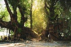 Sonnenlicht, das durch die Bäume glänzt stockfoto