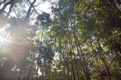 Sonnenlicht, das in einem Regenwald glänzt Lizenzfreie Stockfotografie