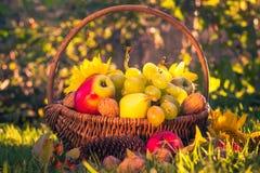 Sonnenlicht der frischen Frucht des Herbstobstgartenkorbes Stockfoto