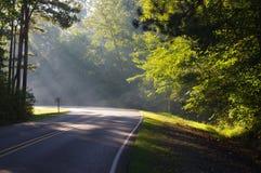 Sonnenlicht durch Bäume Stockfotos