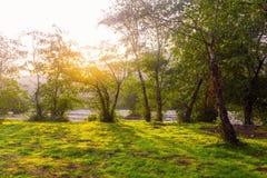 Sonnenlicht durch Baumkronen Stockbild