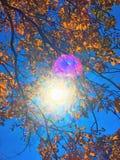 Sonnenlicht durch Buchenbaumblätter lizenzfreie stockbilder
