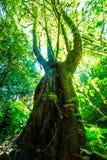 Sonnenlicht durch den großen Baum lizenzfreie stockfotografie