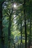 Sonnenlicht durch die Bäume und den Morgennebel lizenzfreie stockbilder