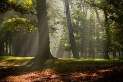 Sonnenlicht durch Nebel im Wald stockfoto