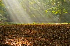 Sonnenlicht durch Nebel im Wald lizenzfreies stockfoto