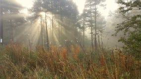 Sonnenlicht in einem nebelhaften Wald Stockbild