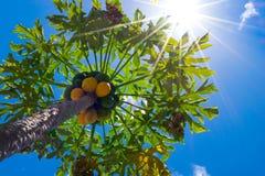 Sonnenlicht erfordert Lizenzfreie Stockfotografie