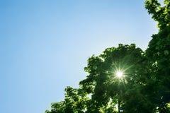 Sonnenlicht glänzt auf einem Hintergrund von Niederlassungen von Bäumen und von blauer SK Stockfotos