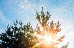 Sonnenlicht glänzt durch den schneebedeckten Baum, Weihnachtsbaum lizenzfreie stockbilder
