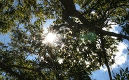 Sonnenlicht im forrest Stockbild