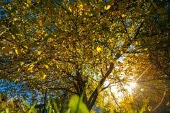 Sonnenlicht im Herbstgarten Stockbilder