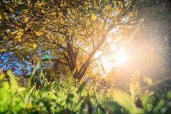 Sonnenlicht im Herbstgarten Stockbild