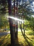 Sonnenlicht im Park Lizenzfreies Stockfoto