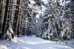 Sonnenlicht im Schneewinter-Waldschneebedeckten Fußweg Stockbilder