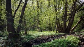 Sonnenlicht im Wald Stockbilder