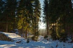 Sonnenlicht im Winterwald Stockbilder