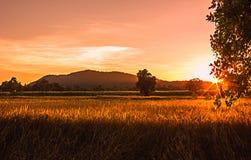 Sonnenlicht am ungeschälten Reis Lizenzfreie Stockfotos
