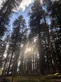 Sonnenlicht unter Bäumen stockfotos