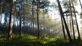 Sonnenlicht vom Nebel Lizenzfreies Stockfoto