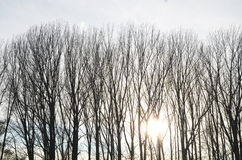 Sonnenlicht während der Bäume Lizenzfreies Stockbild