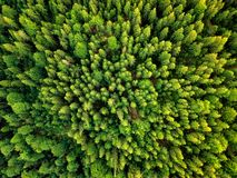 Sonnenlicht-Waldvogelperspektive des Sommers warme Stockbilder