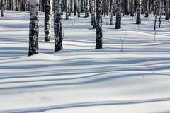 Sonnenlicht zwischen den Bäumen im Winter-Wald Stockfotografie