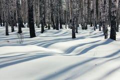 Sonnenlicht zwischen den Bäumen im Winter-Wald Lizenzfreie Stockfotos