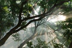Sonnenlichtbäume Lizenzfreies Stockfoto