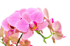 Sonnenlichtfrühlingsorchideen-Blumenhelles beschmutzt Lizenzfreie Stockfotografie