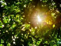 Sonnenlichtgespür mit Blättern Stockfotografie